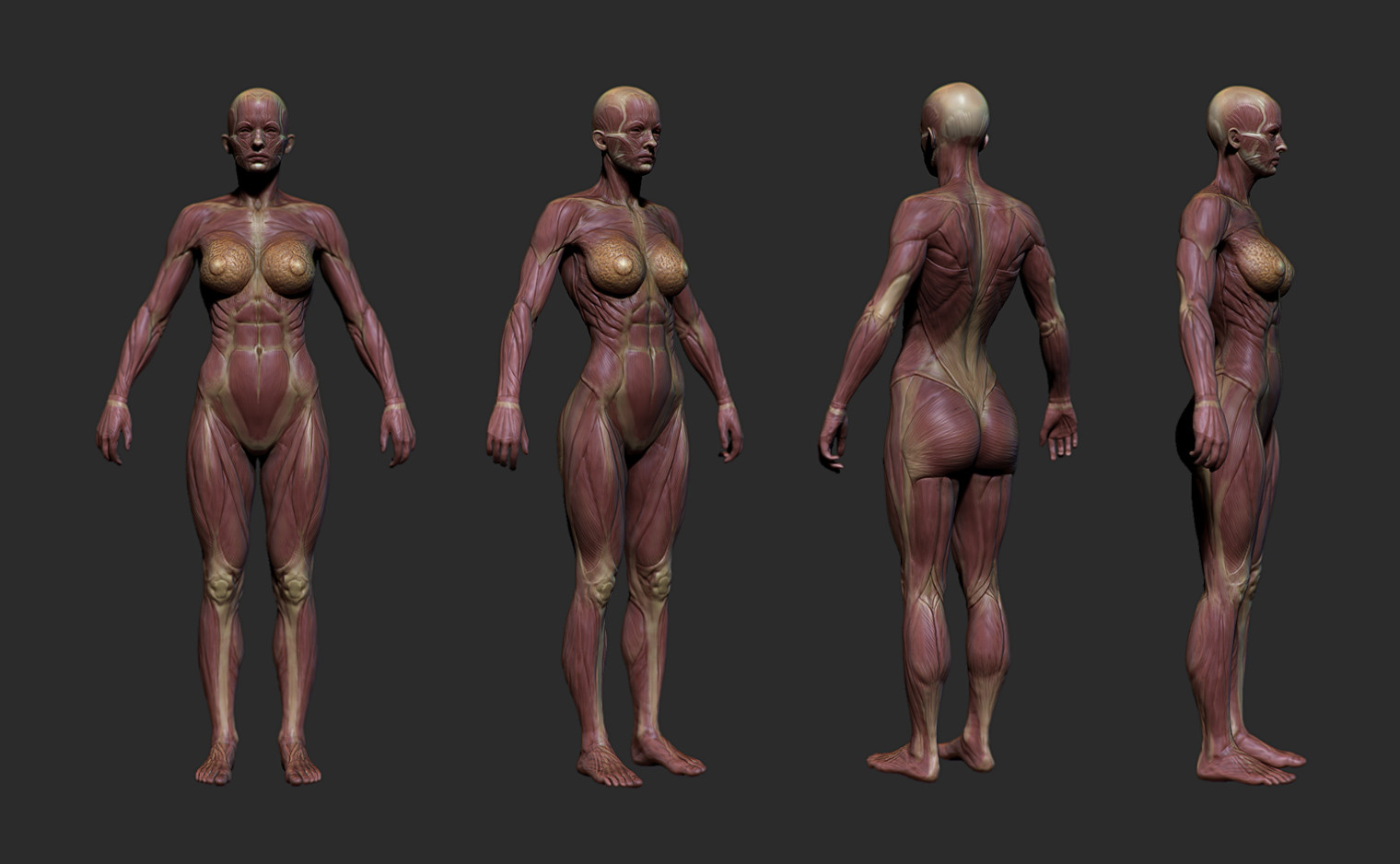 As these characters were damaged, their flesh would give way to reveal blood, muscle and bone underneath. This was one of several damage state models. This was also used for quiet's invisibility effect.